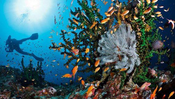 komodo island scuba diving