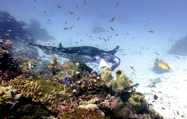 scuba diving komodo