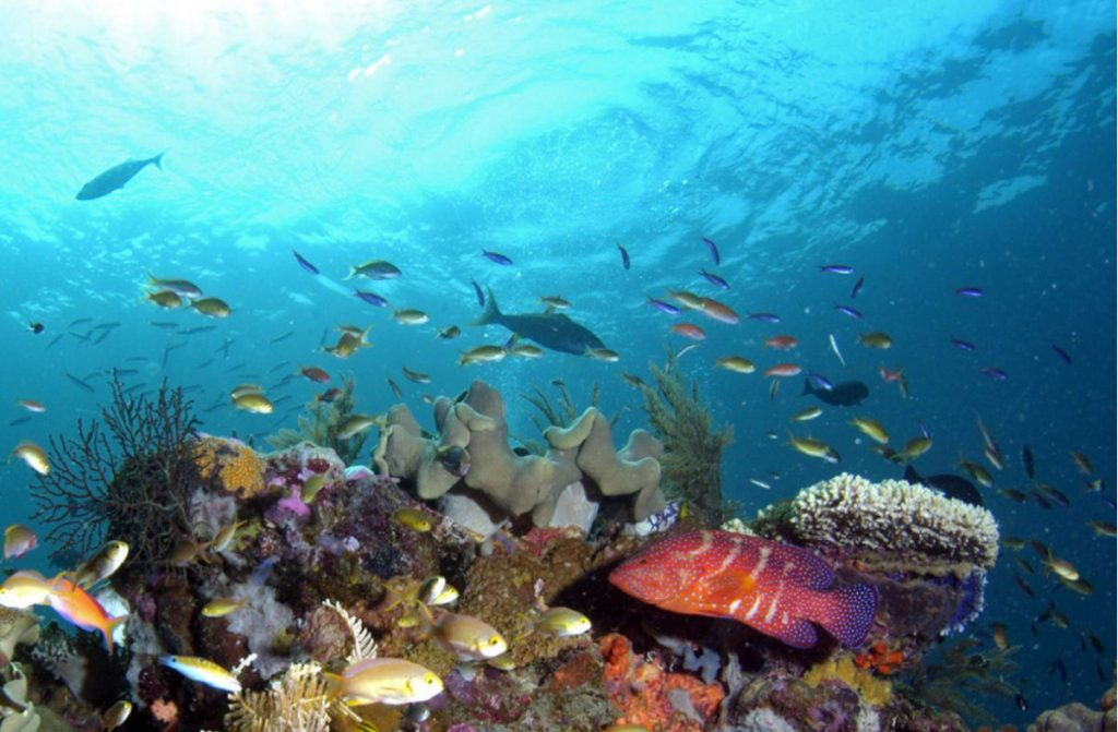 Why You Should Experience a Fenides Liveaboard in Wakatobi